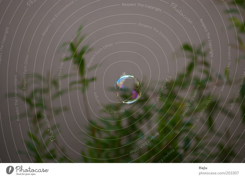 Soap bubble in the green Summer Air Sphere Observe To fall Flying Glittering Uniqueness Round Green Beautiful Calm Movement Elegant Mysterious Precision