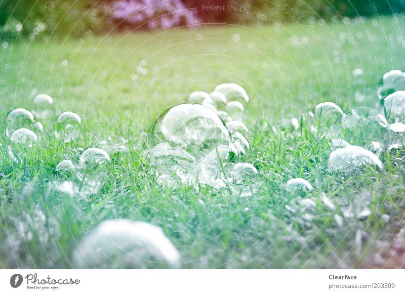 Green Garden Glittering Esthetic Transience Fragile Childhood memory Inspiration Multicoloured Light green