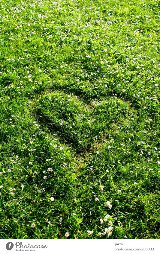 Nature Green Summer Meadow Grass Spring Heart Natural Sign Beautiful weather Environmental protection Infatuation Protection Climate protection