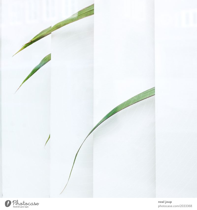 Single leaves of a lonely office plant look through the blinds Office Foliage plant Pot plant Houseplant Window Venetian blinds Sadness Faded Wait Gloomy Green