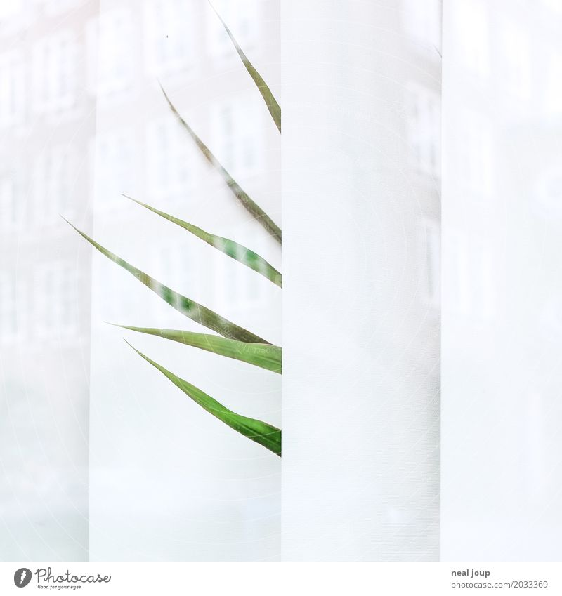 Green White Loneliness Window Sadness Office Gloomy Wait Transience Wanderlust Boredom Frustration Foliage plant Faded Pot plant Houseplant