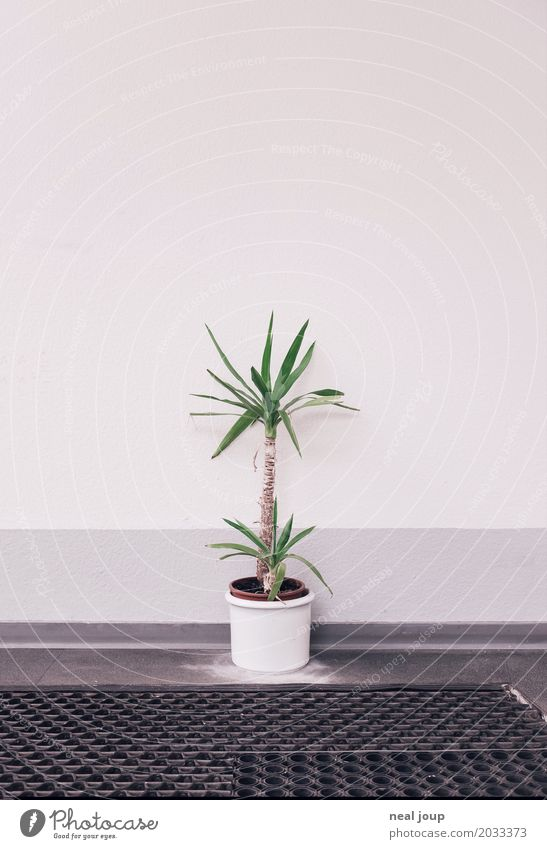 Plant Town Loneliness Sadness Office Gloomy Wait Trashy Retirement Stagnating Disappointment Foyer Office work Unemployment Thrifty Pot plant