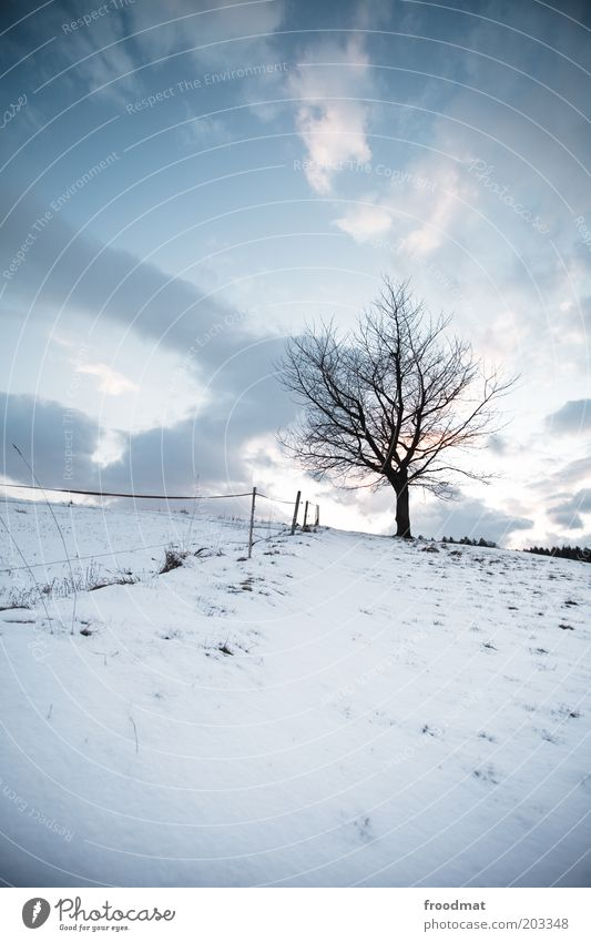 hot outdoors Environment Nature Plant Sky Clouds Winter Climate Beautiful weather Ice Frost Snow Tree Cold Sadness Loneliness Hill Fence Gloomy Grief Silhouette