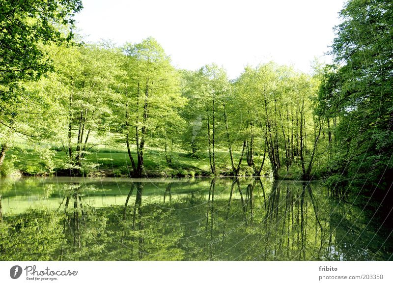 At the lake Garden Environment Nature Landscape Air Water Sky Sunlight Summer Weather Beautiful weather Plant Tree Bushes Foliage plant Park Forest Emotions