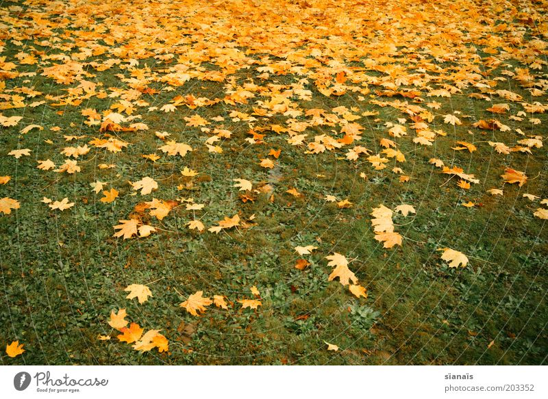 leaf course Environment Nature Plant Autumn Climate Grass Park Meadow Gloomy Under Yellow Green Decline Transience Lose Leaf Autumn leaves Autumnal Ground