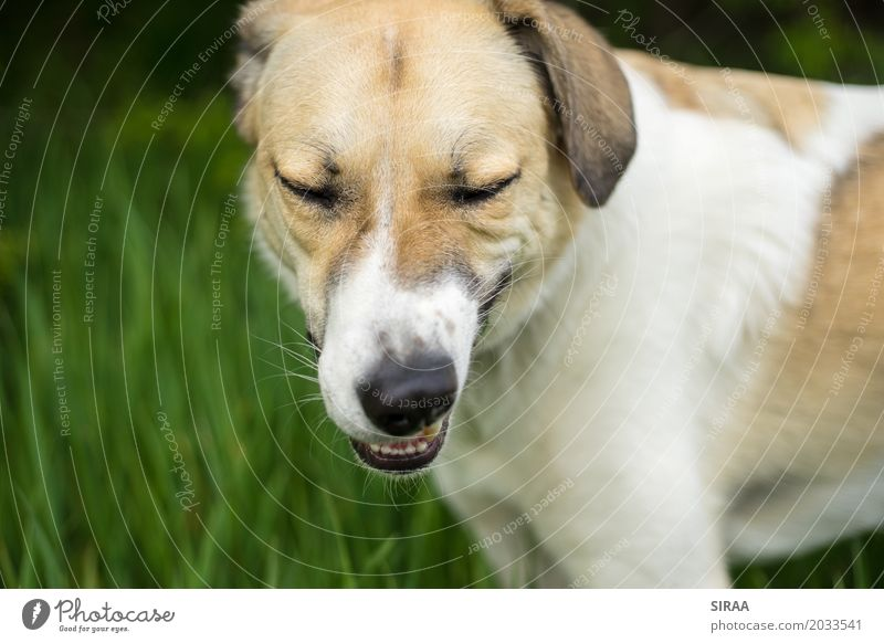 You just have to chew hard Nature Grass Animal Pet Dog Animal face Pelt 1 Funny Yellow Green White Chew Colour photo Exterior shot Close-up Deserted Day Blur
