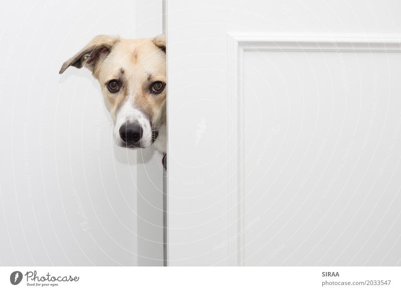 I'm curious about that. Animal Pet Dog Animal face Pelt 1 Curiosity Bright Door Crossbreed Colour photo Interior shot Deserted Copy Space right Long shot