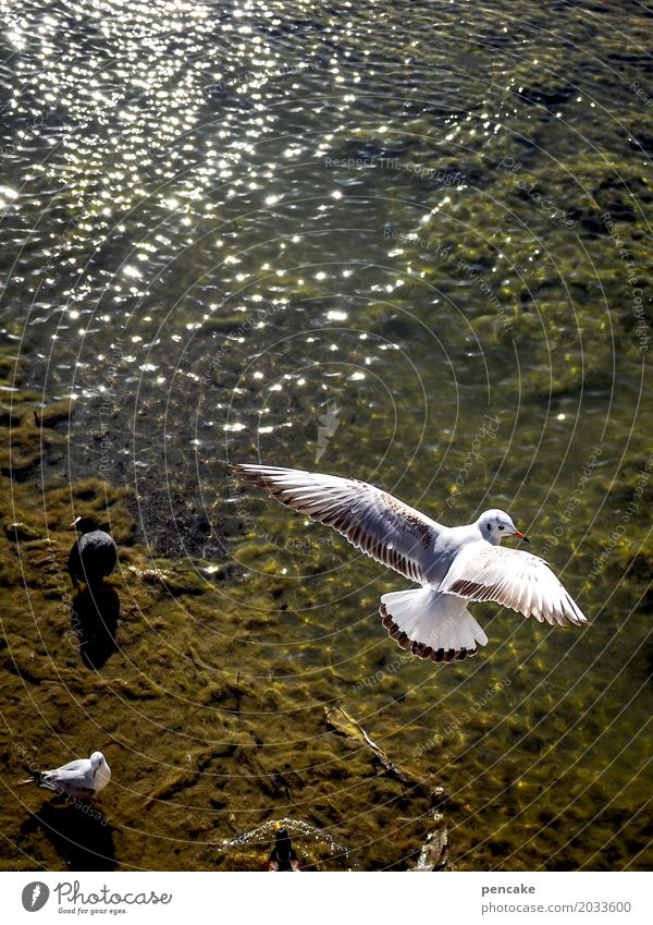 airhead Elements Water Beautiful weather Lakeside Bay Animal Wild animal Bird Flying Seagull Aerial photograph Wing Waves Lake Constance Colour photo