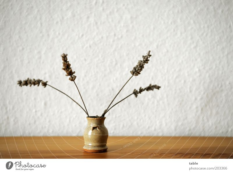 White Plant Gray Small Brown Arrangement Stand Decoration Kitsch Dry Wallpaper Fragrance Vase Lavender Wood grain Herbs and spices