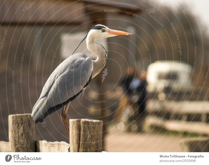Heron on the fence Human being Woman Adults Man 2 Animal Sun Sunlight Beautiful weather Village House (Residential Structure) Hut Mobile home Trailer