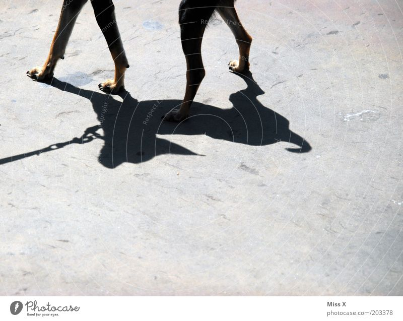 wow wow Animal Pet Dog 1 Thin Small Walk the dog Colour photo Subdued colour Exterior shot Detail Deserted Copy Space bottom Shadow Contrast Silhouette Sunlight