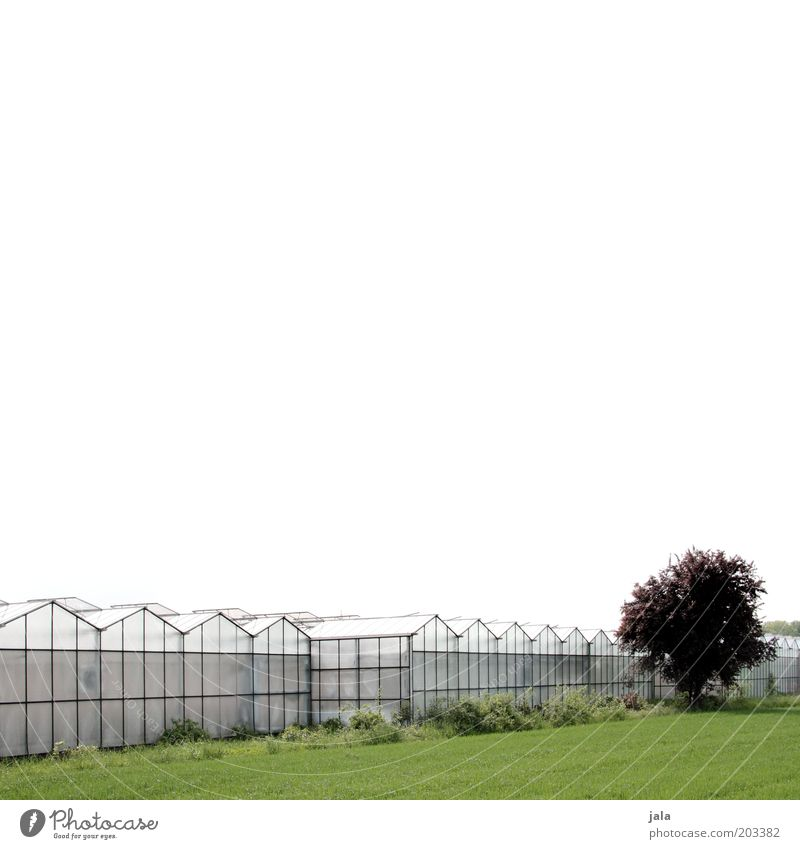 market garden Company Sky Tree Meadow Field Manmade structures Building Greenhouse Large Market garden Agriculture Colour photo Exterior shot Copy Space top
