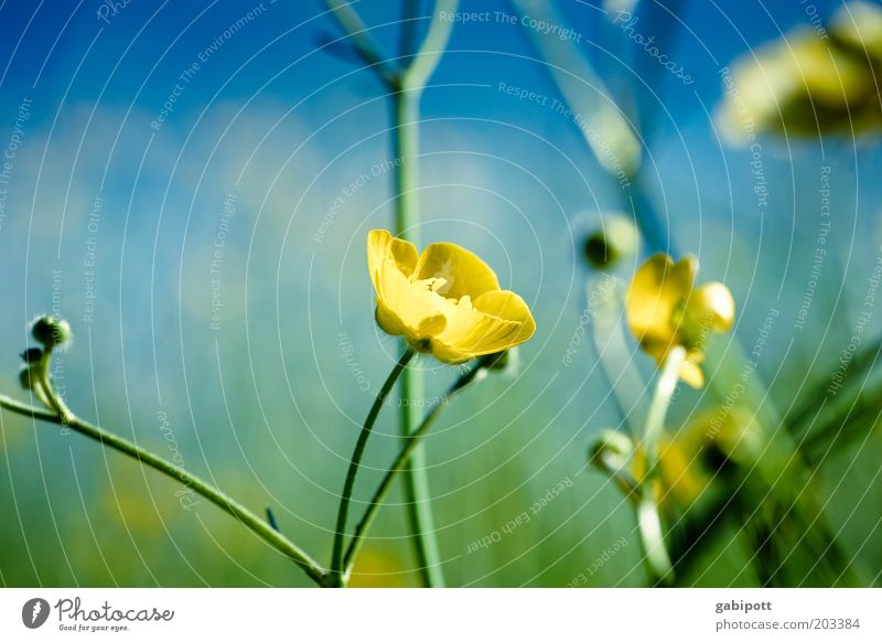 Summer full Environment Nature Plant Flower Bushes Wild plant Crowfoot Natural Blue Multicoloured Yellow Green Exterior shot Close-up Deserted Day Sunlight