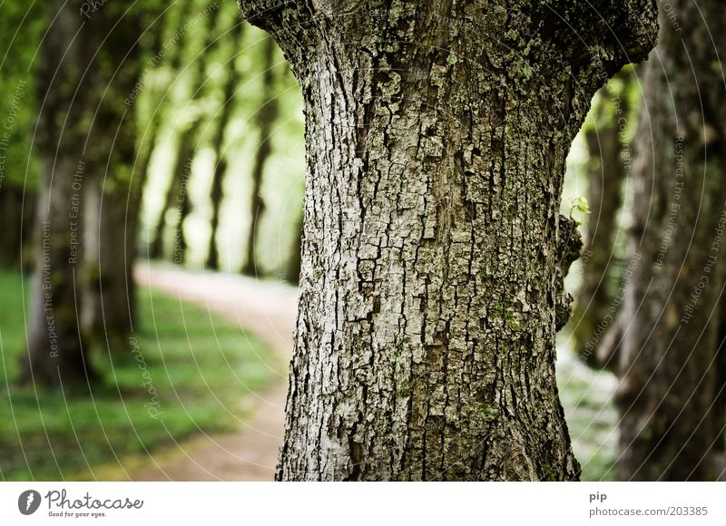 alley Nature Tree Park Avenue Lanes & trails Near Tree trunk Tree bark Green Colour photo Exterior shot Detail Deserted Day Contrast Blur Central perspective