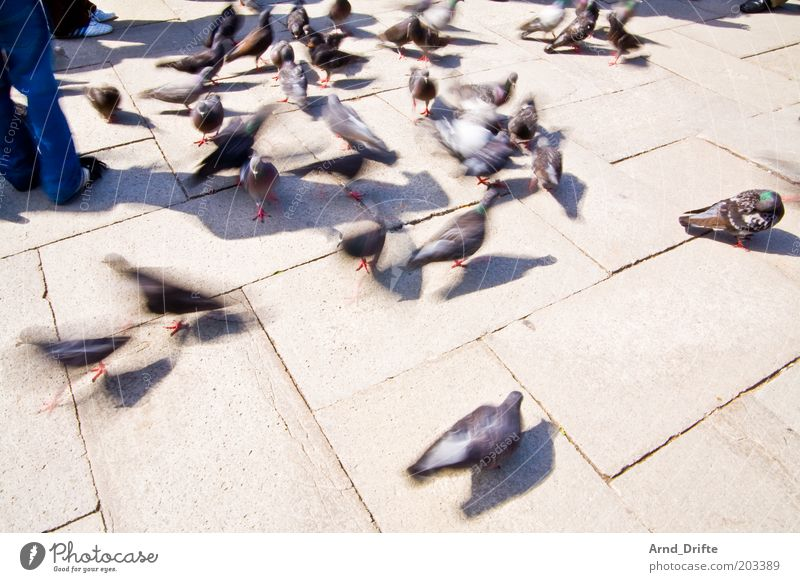 pigeons Leisure and hobbies Trip Weather Animal Bird Group of animals Moody Vacation destination Venice Colour photo Exterior shot Day Light Shadow