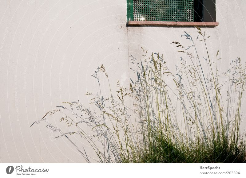 White Green Wall (building) Window Grass Garden Wall (barrier) Grating