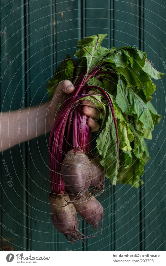 Hand holds a bunch of beetroot Man Adults Wood To hold on Natural Green Red Nature Red beet Colour photo Interior shot Day Bird's-eye view