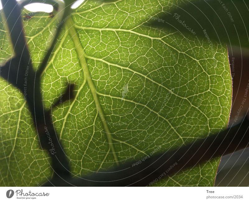leaf Leaf Green Light Vessel