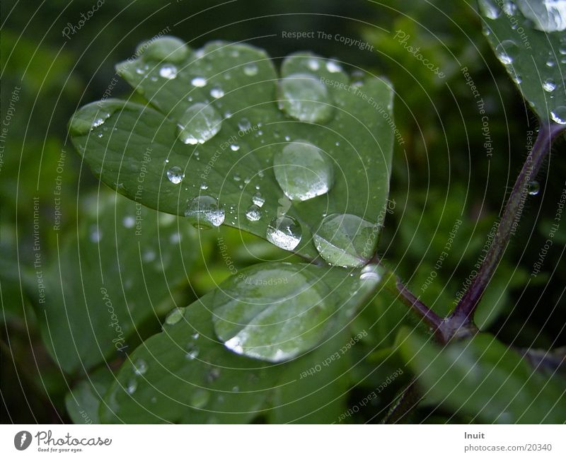 Plant Leaf Rain Drops of water