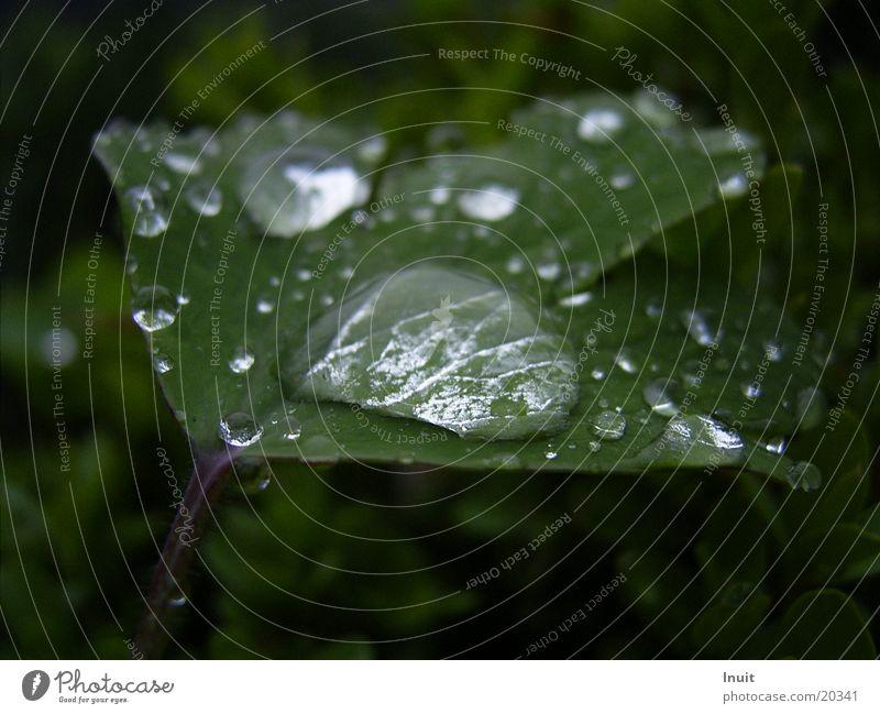 Drops 2 Leaf Plant Drops of water Rain