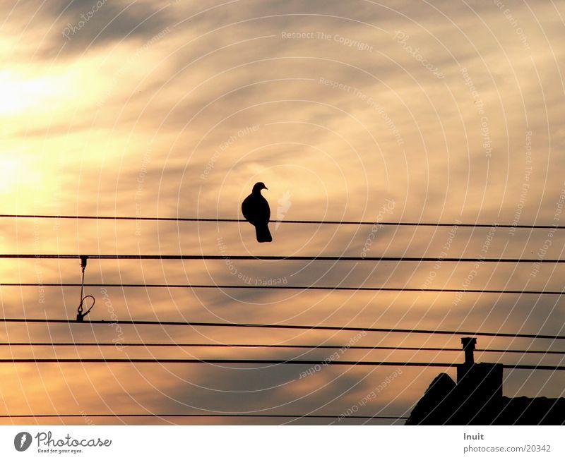 Moody Railroad Pigeon Dusk Overhead line