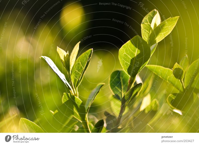 green Environment Nature Plant Sunlight Spring Summer Climate Weather Beautiful weather Bushes Leaf Foliage plant Meadow Exceptional Glittering Good Uniqueness