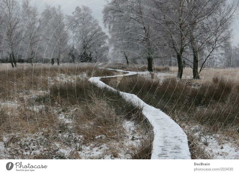 Winter in the raised bog Nature Bog Marsh Lanes & trails Calm Humble High Venn Fen Winter mood Loneliness Colour photo Subdued colour Exterior shot Deserted Day