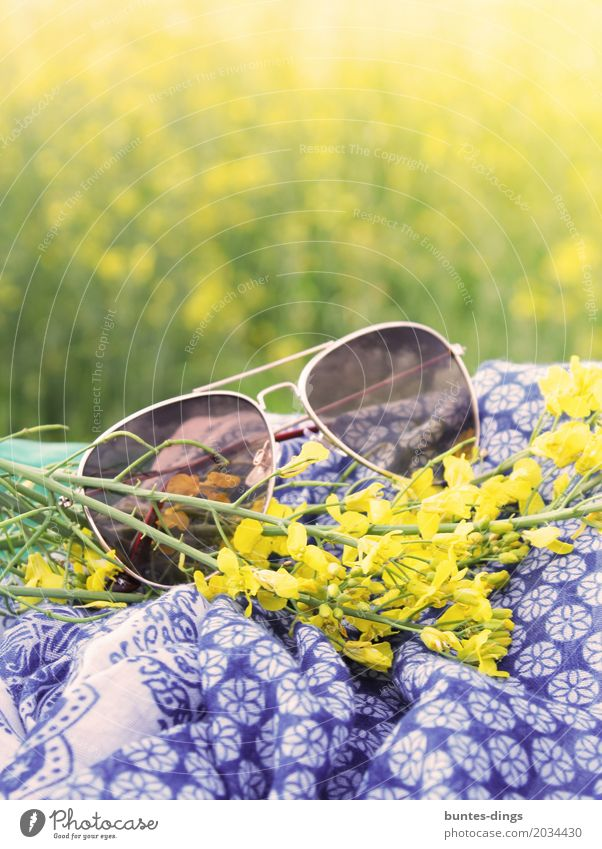 sunglasses Lifestyle Joy Contentment Relaxation Calm Vacation & Travel Trip Freedom Summer Summer vacation Sun Sunbathing Nature Landscape Plant Sunlight