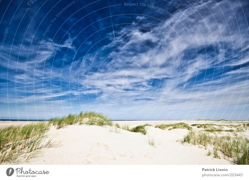 Spiekeroog Environment Nature Plant Sand Air Sky Clouds Summer Beautiful weather Coast Beach North Sea Ocean Island Blue Dune Formation Vacation & Travel Calm