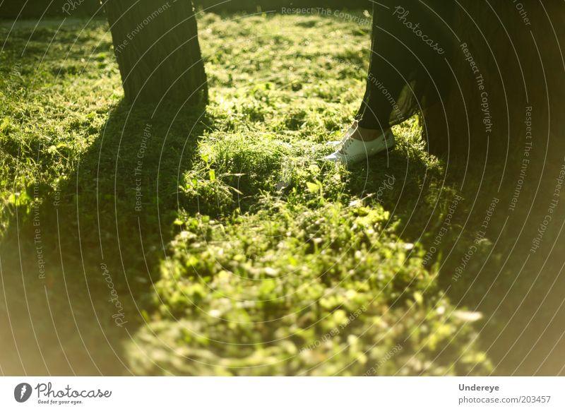 Sun Tree Human being Green Grass Legs Feet Footwear Silent