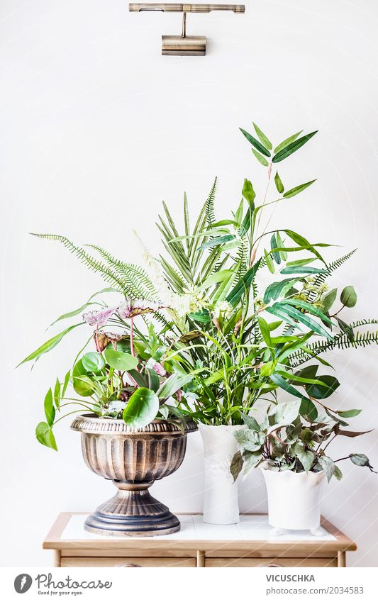 Nature Plant Summer Flower Joy Wall (building) Interior design Style Grass Wall (barrier) Design Flat (apartment) Leisure and hobbies Living or residing Room