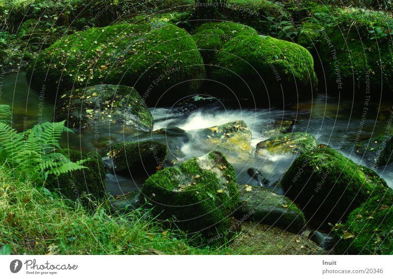brook England National Park Stone Rock Water Dartmoor Moss