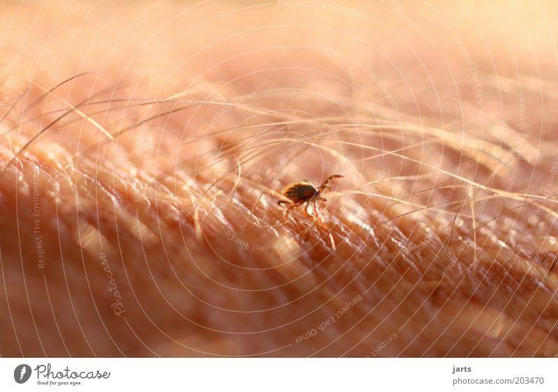 Animal Life Arm Skin Wild animal Threat Illness To feed Human being Gooseflesh Tick Health hazard