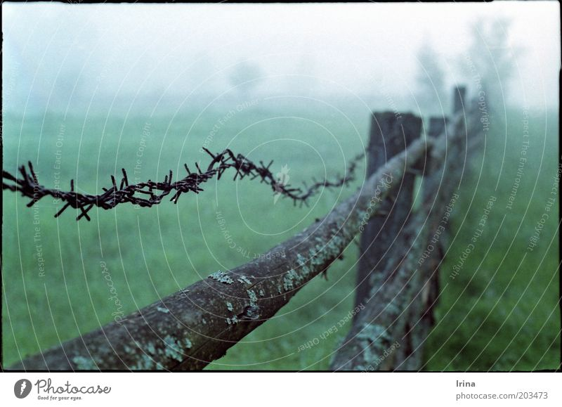 insomnia Meadow Moody Calm Building line Fog Dawn Morning fog Fence Barbed wire Border Pasture Wooden fence Exterior shot Deserted Shallow depth of field