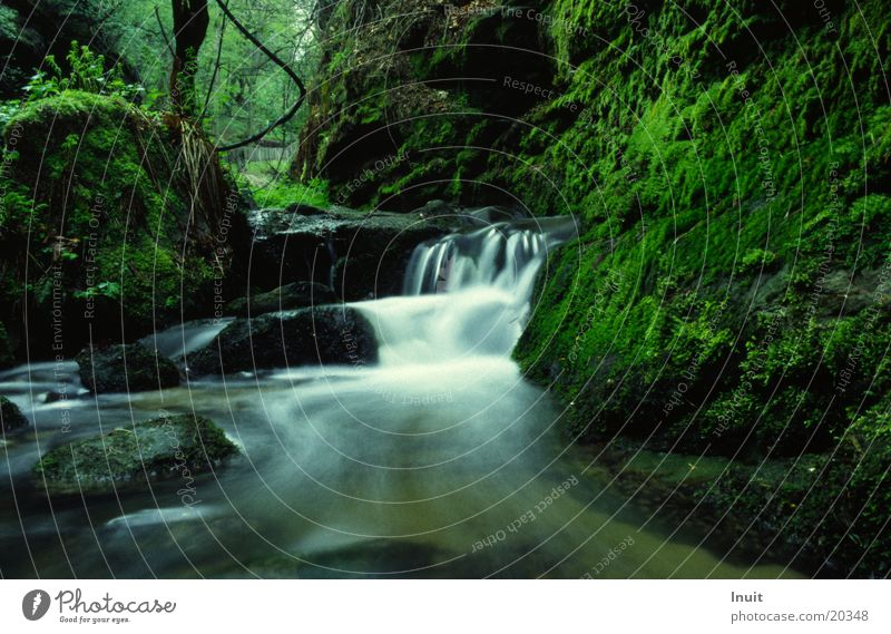 Water Idyll Moss
