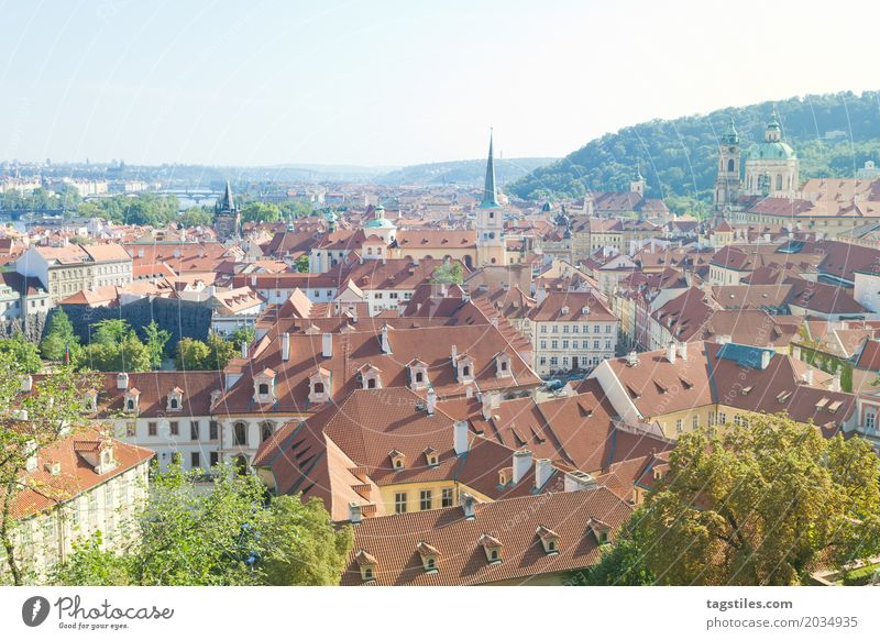 VIEW OVER THE OLD TOWN OF PRAGUE Prague The Moldau Blue Vacation & Travel Travel photography Nature Forest Tree Czech Republic Lighting Town Europe City trip