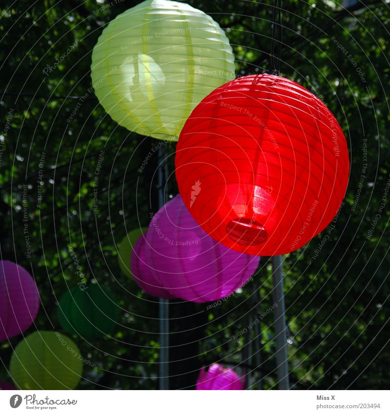 Jubilee Gardens Party Feasts & Celebrations Summer Tree Hang Multicoloured Colour Lamp Red Yellow Pink Decoration Lampion Colour photo Exterior shot Deserted