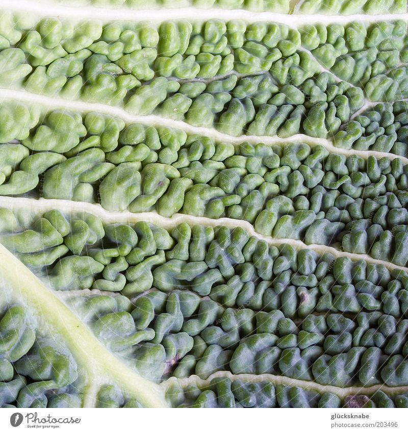 savoy cabbage Vegetable Leaf Fresh Natural Green Colour photo Close-up Detail Macro (Extreme close-up) Structures and shapes Savoy cabbage Vitamin Food Day