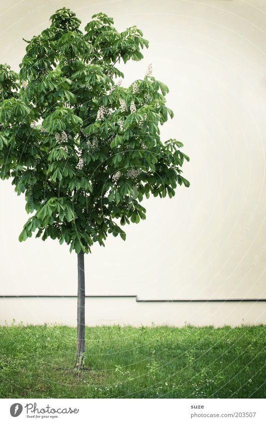 Nature Green White Plant Tree Loneliness Environment Meadow Wall (building) Small Wall (barrier) Facade Growth Stand Individual Simple