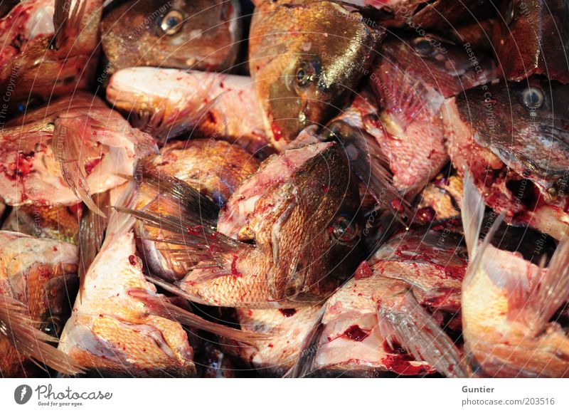 Red Black Animal Death Dirty Pink Food Fish End Murder Blood Markets Muzzle Upward Fin Slimy