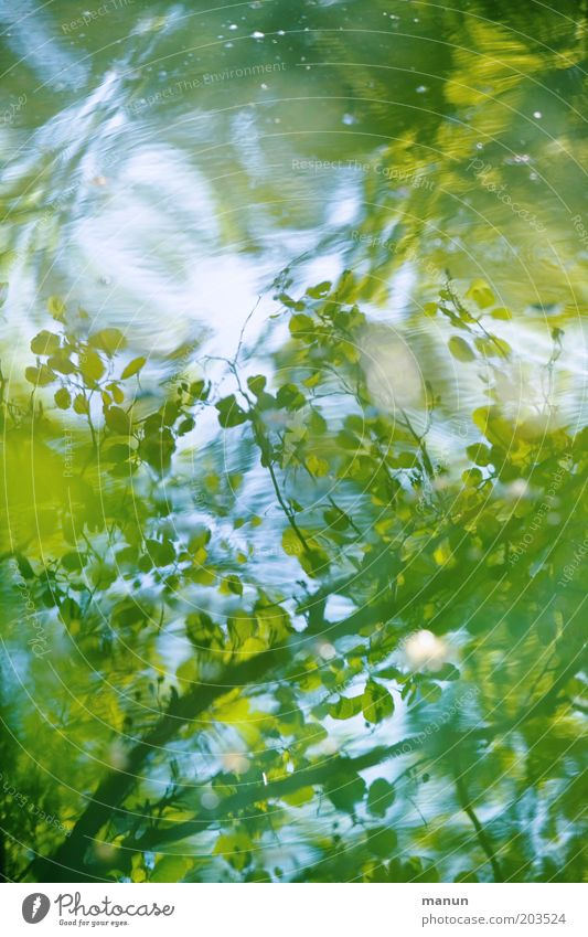 water level Waves Nature Water Spring Summer Leaf Forest Lakeside Pond Esthetic Fresh Positive Blue Green Idyll Environmental protection Exterior shot