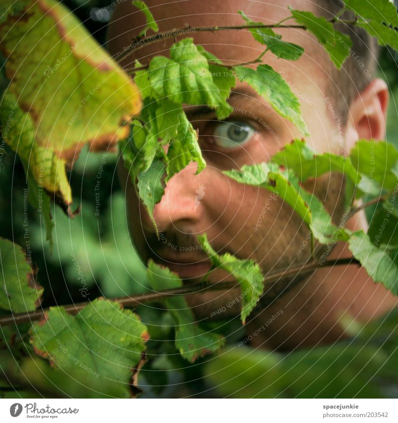 IN THE WOODS Masculine Young man Youth (Young adults) Face Eyes 1 Human being 30 - 45 years Adults Nature Plant Bushes Leaf Curiosity Fear Hide Hiding place