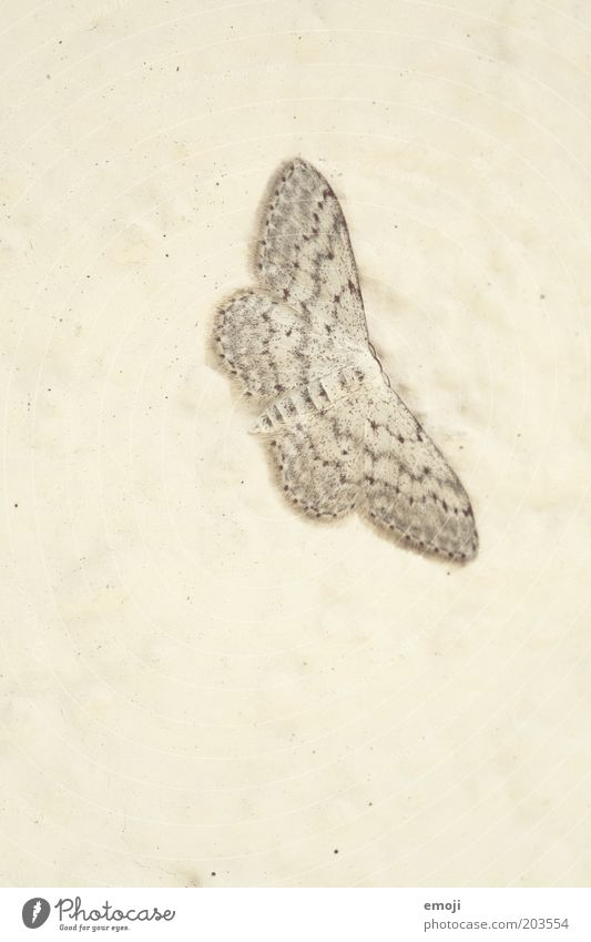 Animal Simple Butterfly Flat Camouflage Structures and shapes Perspective Unicoloured