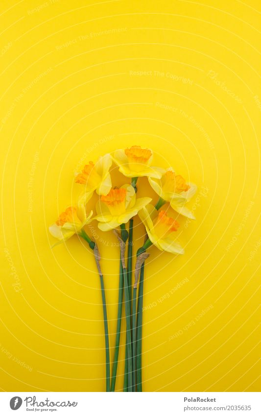 #AS# Spring 2017 Art Work of art Esthetic Narcissus Easter Spring flower Spring colours Spring celebration Yellow Yellowness Blossom Bud Many Bouquet
