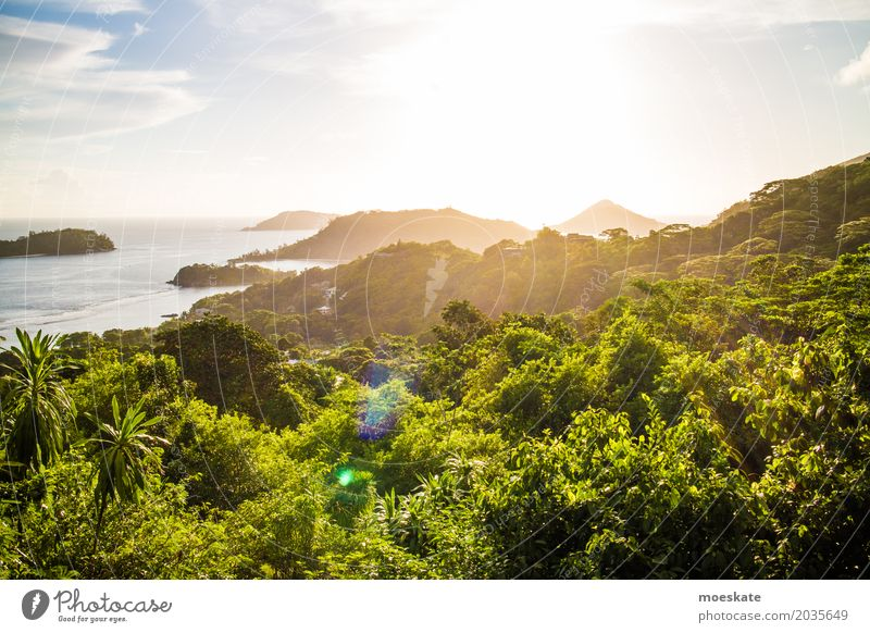 Sunset Seychelles Mahe Island Environment Nature Landscape Plant Water Sky Clouds Sunrise Sunlight Summer Beautiful weather Tree Exotic Forest Virgin forest