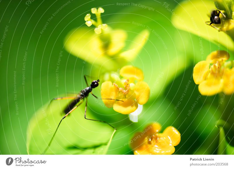Leave me alone! Animal 2 Hunting Insect Ant Crane fly Flower Plant Pursue Beautiful Nature Observe Escape Small Green stilts fly Colour photo