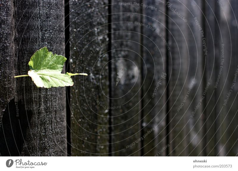 Fence again Plant Leaf Garden Wooden fence Wooden board Dark Spring fever Colour photo Pattern Day Contrast Shallow depth of field Central perspective Gap
