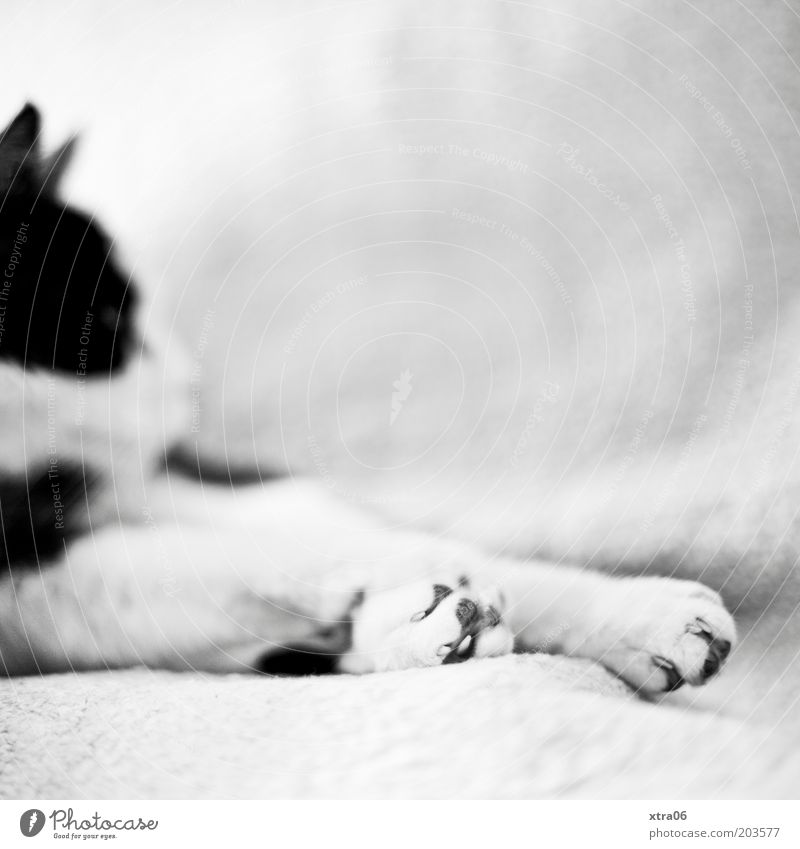 Animal Relaxation Cat Pelt Paw Pet Claw Indifferent Goof off