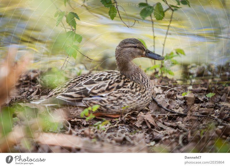 Nature Summer Water Leaf Animal Environment Spring Feminine Lake Lie Wild animal Sit Wait Safety Protection Lakeside