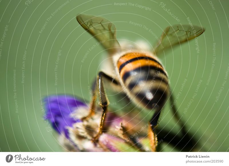departure Animal Bee Nectar Flower Wing Multicoloured Beautiful Near Small Fragile Plant Nature Green Sit Insect Colour photo Macro (Extreme close-up) Deserted